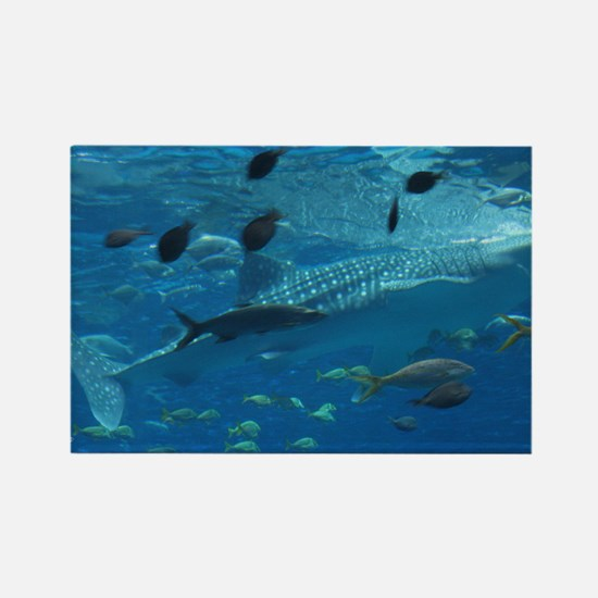 Whale Shark 23 x 35 Print Rectangle Magnet