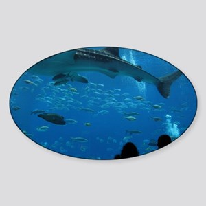 Whale Shark 16 x 20 Print Sticker (Oval)