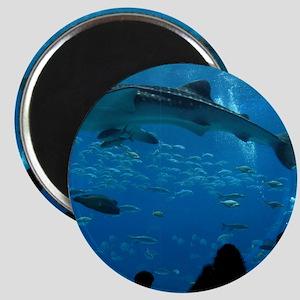 Whale Shark 16 x 20 Print Magnet