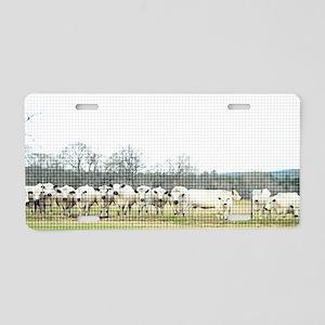 British White Cow Herd on t Aluminum License Plate