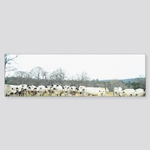 British White Cow Herd on the Fen Sticker (Bumper)