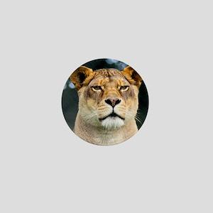Lion Stare Mini Button