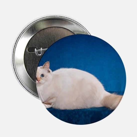 "Birman Cat Calendar 2.25"" Button"