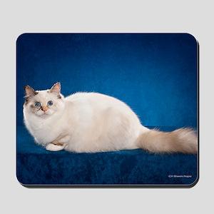 Birman Cat Calendar Mousepad