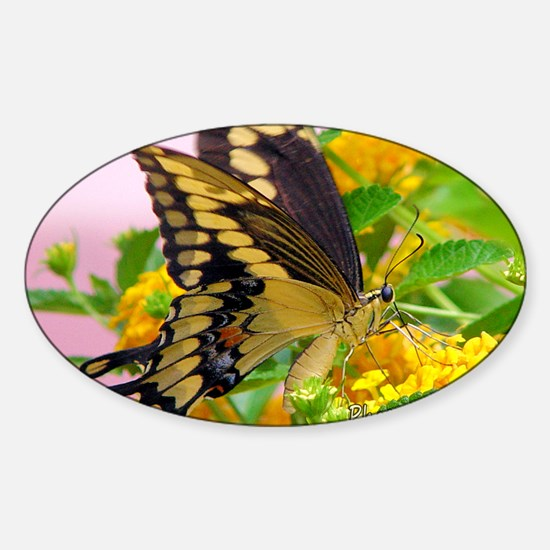 greeting-card---swallowtail-butterf Sticker (Oval)
