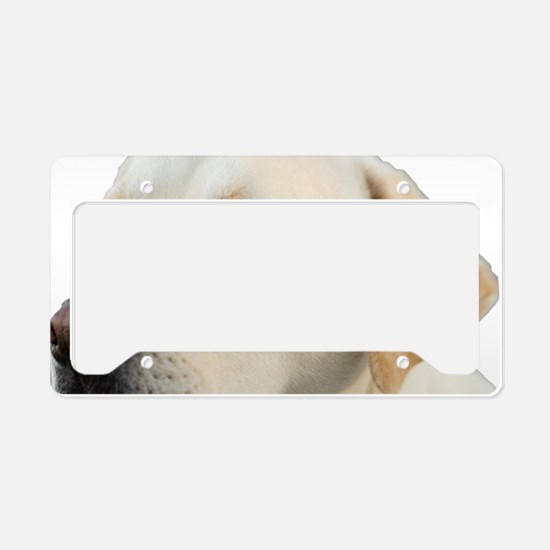Yellow Lab Head License Plate Holder
