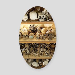 Hominid skull casts Oval Car Magnet