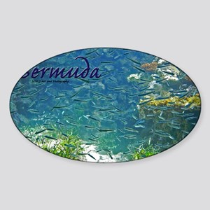 Bermuda Sticker (Oval)