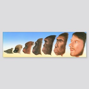 Human evolution, artwork Sticker (Bumper)