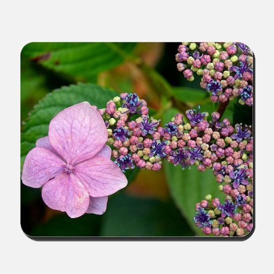 Lacecap Hydrangea Mousepad