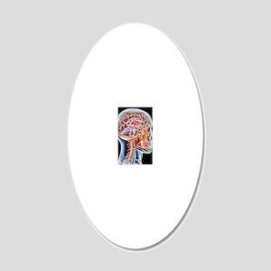 Internal brain anatomy, artw 20x12 Oval Wall Decal