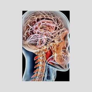 Internal brain anatomy, artwork Rectangle Magnet