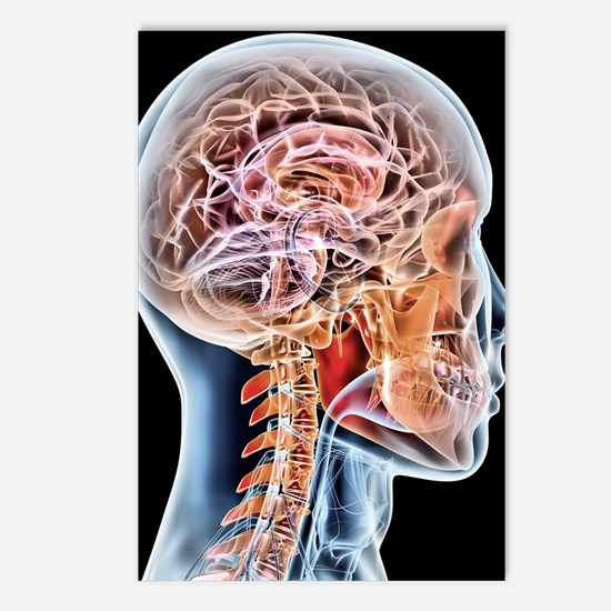 Internal brain anatomy, a Postcards (Package of 8)