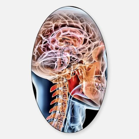 Internal brain anatomy, artwork Sticker (Oval)
