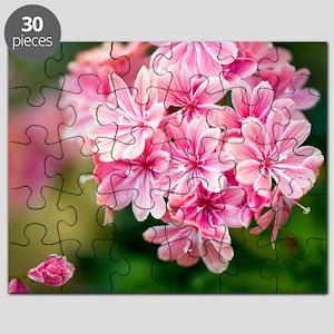 Lewisia 'Ashwood Carousel' Puzzle