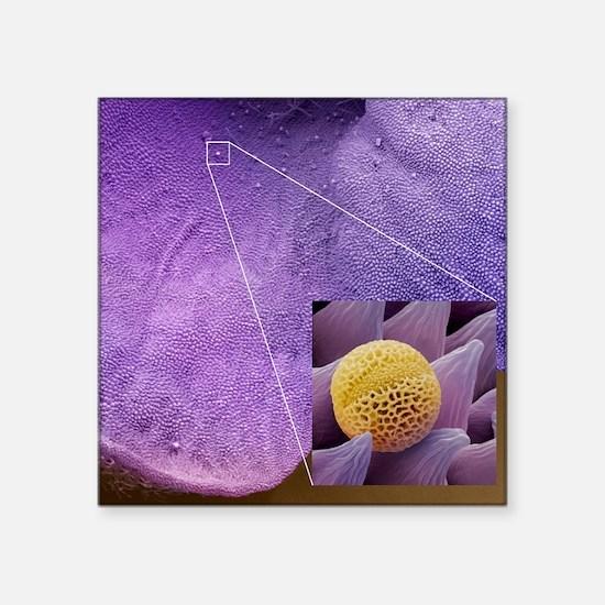 """Lavender pollen grain, SEM Square Sticker 3"""" x 3"""""""