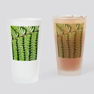 Male fern (Dryopteris filix-mas) Drinking Glass