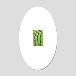 Male fern (Dryopteris filix- 20x12 Oval Wall Decal