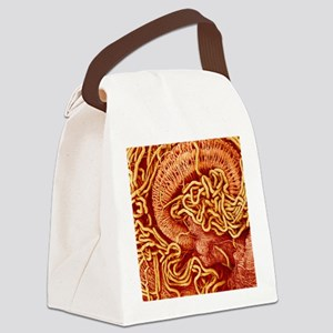 Honey bee excretory system, SEM Canvas Lunch Bag