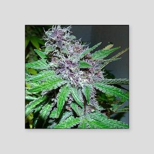 "Organic Purple Bud Square Sticker 3"" x 3"""