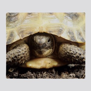 Horsfield tortoise Throw Blanket