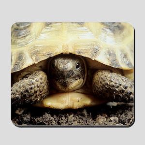 Horsfield tortoise Mousepad