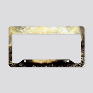 Horsfield tortoise License Plate Holder