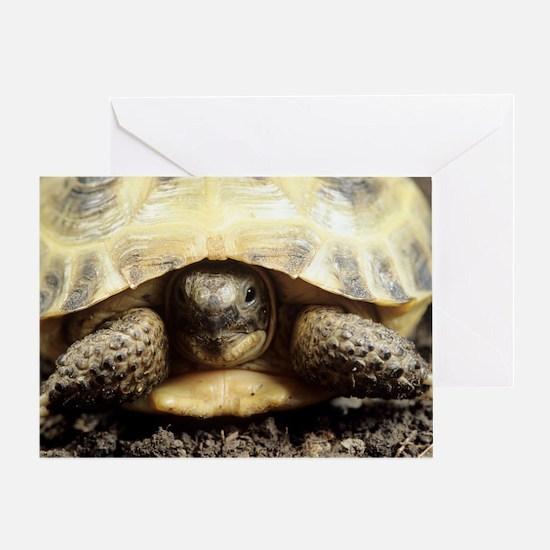 Horsfield tortoise Greeting Card