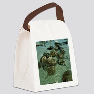 Horseshoe crab research Canvas Lunch Bag