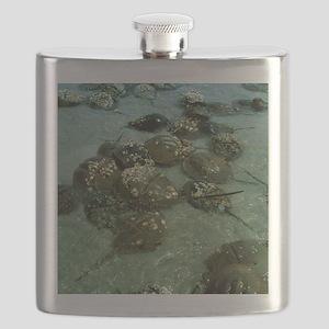 Horseshoe crab research Flask