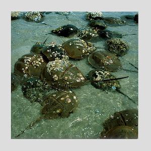 Horseshoe crab research Tile Coaster