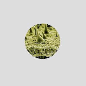 Nettle leaf trichomes, SEM Mini Button