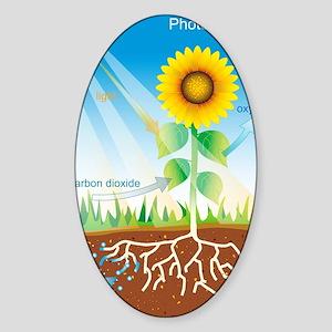 Photosynthesis, illustration Sticker (Oval)