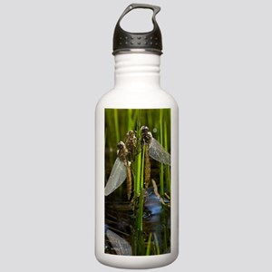 Newly-emerged dragonfl Stainless Water Bottle 1.0L