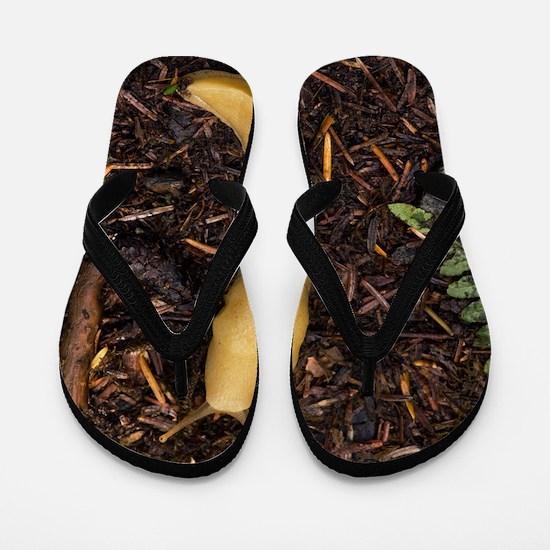 Pacific banana slug Flip Flops