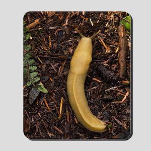 Pacific banana slug Mousepad