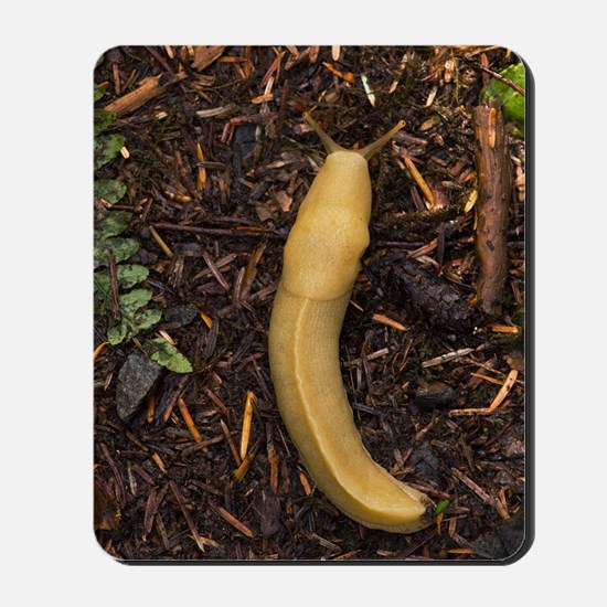 Pacific banana slug Mousepad