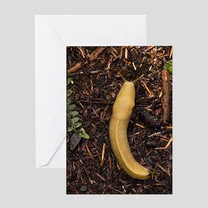 Pacific banana slug Greeting Card