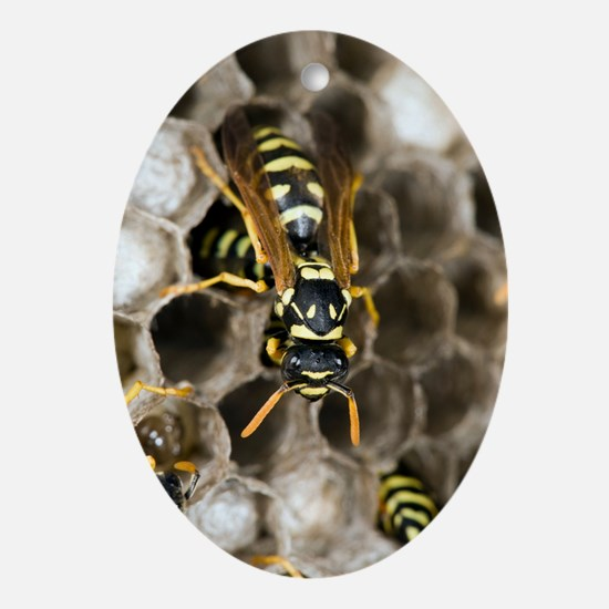 Paper Wasp Oval Ornament