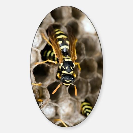 Paper Wasp Sticker (Oval)