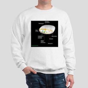 Platelet, artwork Sweatshirt