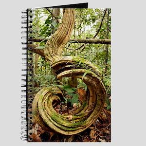 Rainforest undergrowth Journal