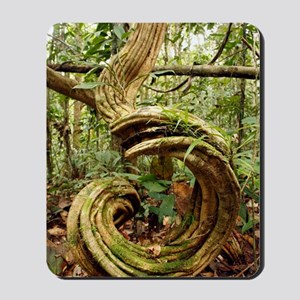 Rainforest undergrowth Mousepad