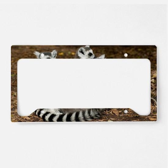 Ring-tailed lemur family License Plate Holder