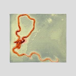 Syphilis bacterium, TEM Throw Blanket