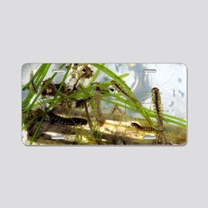 Insect larvae Aluminum License Plate
