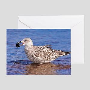 Immature herring gull Greeting Card