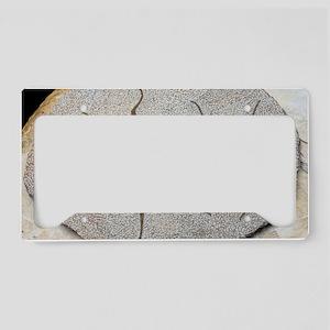 Starfish fossils License Plate Holder
