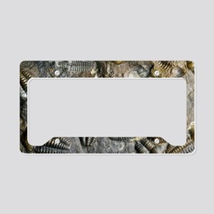Trilobite fossils License Plate Holder