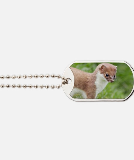 Stoat Dog Tags